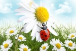 Daisies & Lady Bug