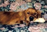 Sam w:Chew Bone