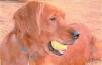 Sam w:Tennis Ball 2:2003